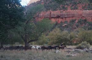 Rush hour in Zion