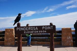 Raven posing for pictures at Ponderosa Point