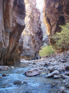 Sun in the Narrows - near the beginning where the sun can reach the canyon floor