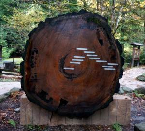 Redwood lifeline
