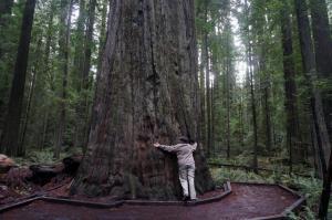Tree Hugger Holly
