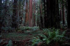 Jurassic Park forest