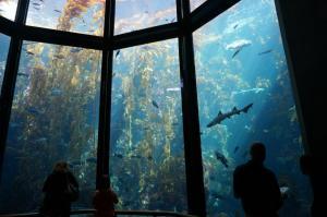 Kelp Forest Tank