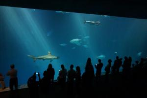 Huge Ocean Tank