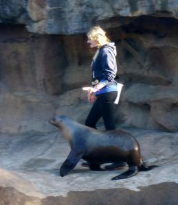 Trainer taking her sea lion for a walk