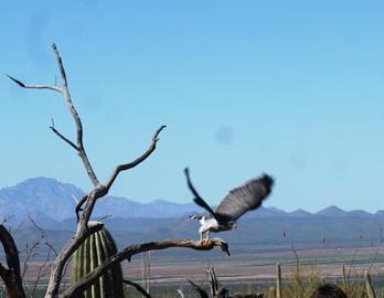 032419_2356_TucsonAreaA16.jpg